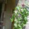 PIC_0355