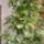 Verandán tárolt és teleltetett növények