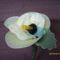 harisnyavirágok, talán orchidea, csupán fantázis kérdése, hogy ki, mit lát benne