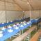 PFT.BULI.2010.05.14