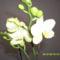 Tél 3    orchidea