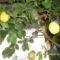 Tél 6     citrom