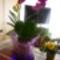 2011 virágok 008