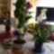 2011 virágok 009