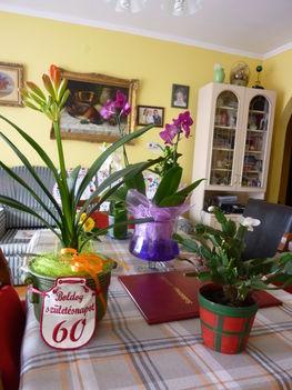 2011 virágok 010