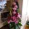 2011 virágok 013