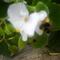 Egy szorgos méhike