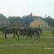 Szépek ezek a lovak