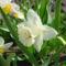 Tavaszi virágok 1