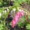 Tavaszi virágok 12