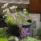 Tavaszi virágok 13