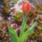 Tavaszi virágok 15