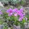 Tavaszi virágok 16