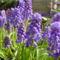 Tavaszi virágok 3