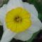 Tavaszi virágok 8