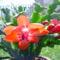 Tréfás kedvű Karácsonyi kaktusz Húsvétkor!