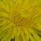 Virágok másképp 2