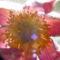 Virágok másképp 5