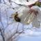 Méhecske virágokat porozza