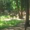 nyiregyháza vadaspark 075