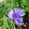 Májusi virágok 10