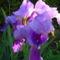 Májusi virágok 11