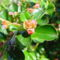 Májusi virágok 12