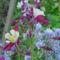 Májusi virágok 1
