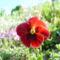 Májusi virágok 5