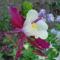Májusi virágok 6