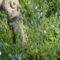 Májusi virágok 7