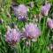 Májusi virágok 8