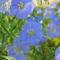 Májusi virágok 9