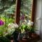 orchideák az ablakban