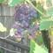 gyümölcsös 011