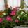 Májusi virágok