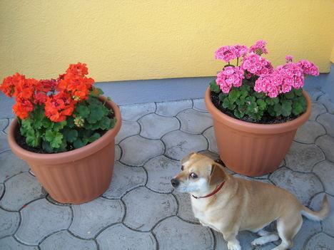 Virágos udvar 002