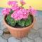 Virágos udvar 012