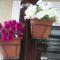 2012.04.05.19.-23 Petunia