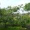Eső után009