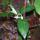 Kambodzsa növényvilága