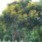 Kuba növényvilága 3