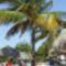 Kuba növényvilága 4