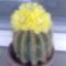 szobanövényeim
