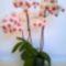 71 virág 3