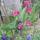 Harangvirág1