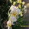 Tavaszi virágok 2012 013