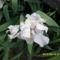 Tavaszi virágok 2012 019