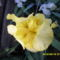 Tavaszi virágok 2012 023