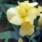 Tavaszi virágok 2012 037